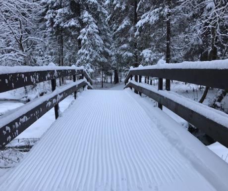 В лесах, проложена специальная лыжная трасса